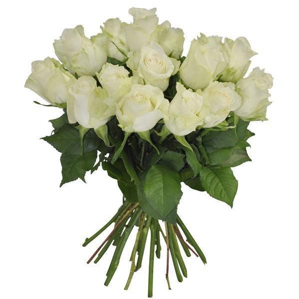 15 Rosas blancas