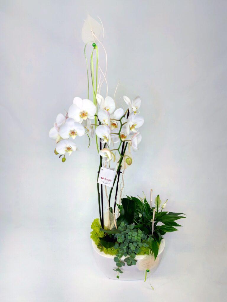 Centro de Orquídea