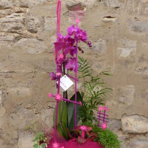 Delicadeza en rosa